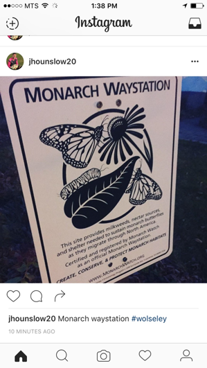 Monarch butterfly waystation sign in a garden.